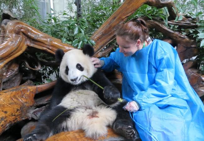 Ehdoton kohokohta! Saada silittää pandaa!