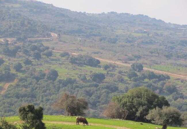 Suuntavaistottoman tulikaste: autolla Israelissa