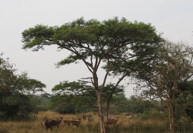 Safarilla vain luonnon omia ääniä kuunnellen