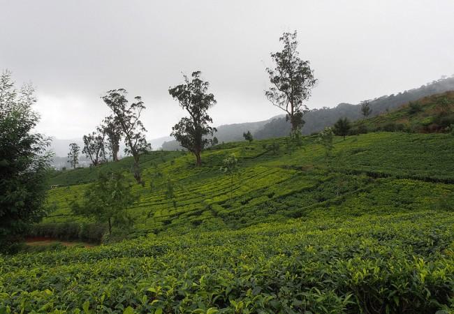 Nuwara Eliyassa ensi kosketus srilankalaiseen luontoon