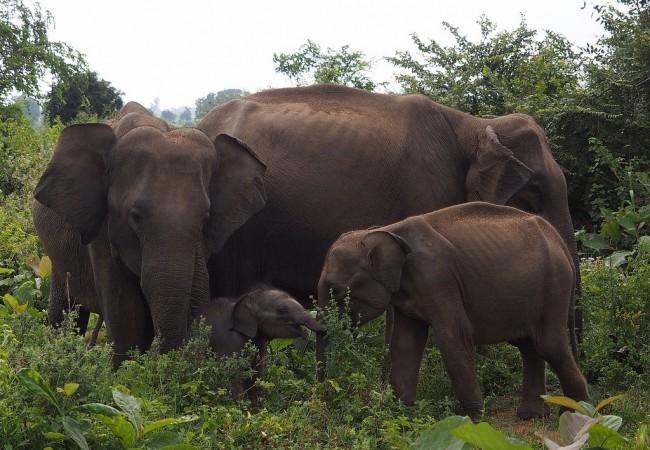 Udawalawe on norsufanin taivas