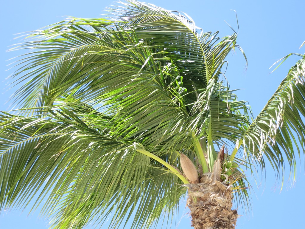 Pientä mediakritiikkiä – ei Karibian-risteily ole ökyilyä!