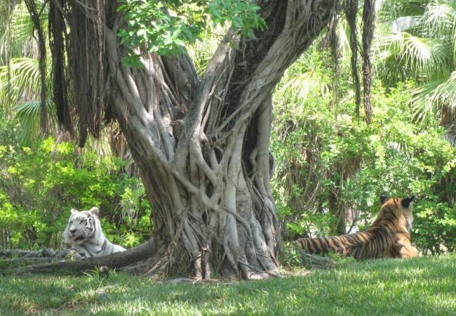 Lupa lapsettaa – Miami Metro Zoo