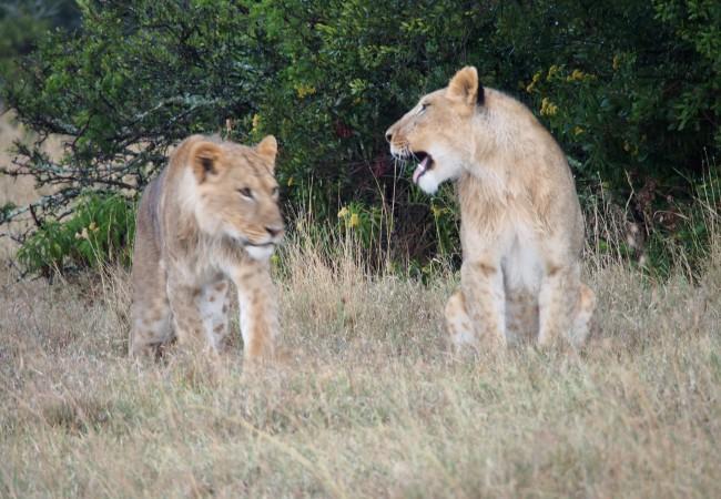 Ensimmäisellä safarilla (Mieletöntä!)