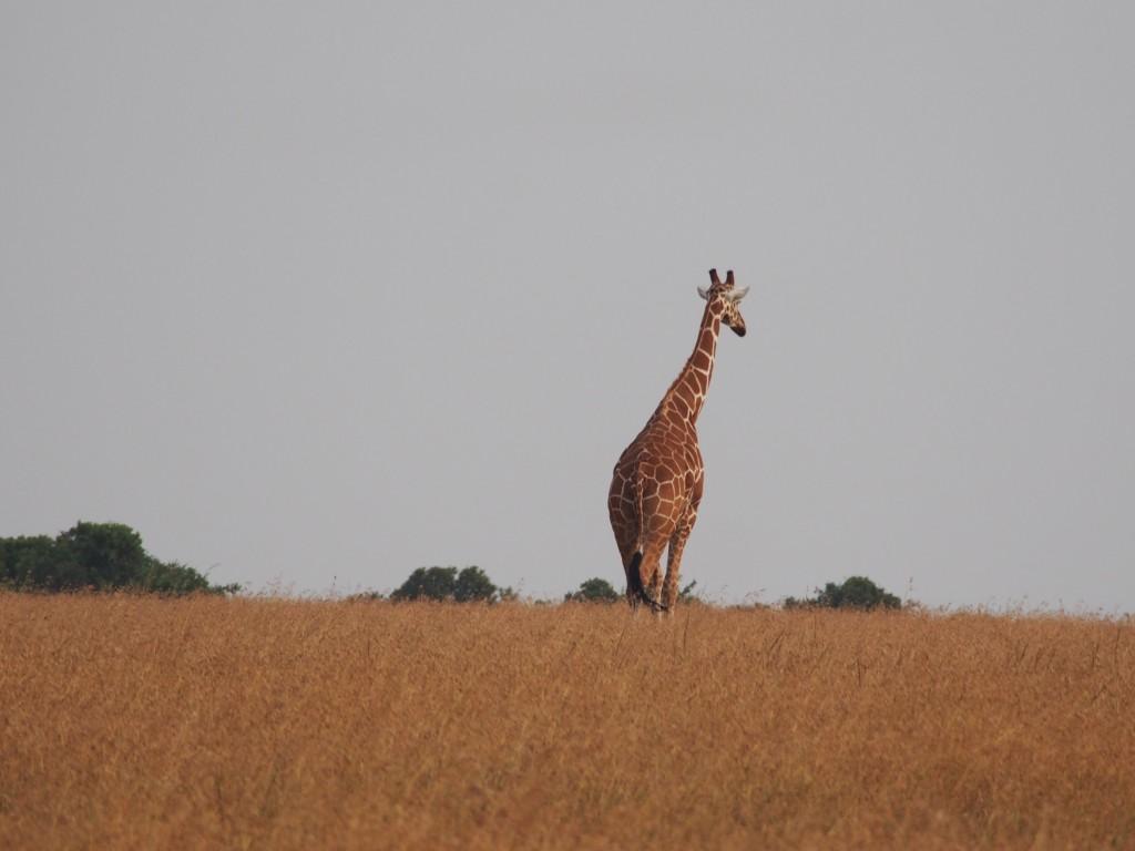Sweetwatersissa – täydellistä safarimatkailua