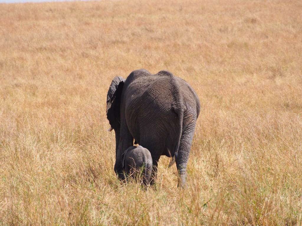 Työpäivän verran eläimiä ja pompottelua savannilla
