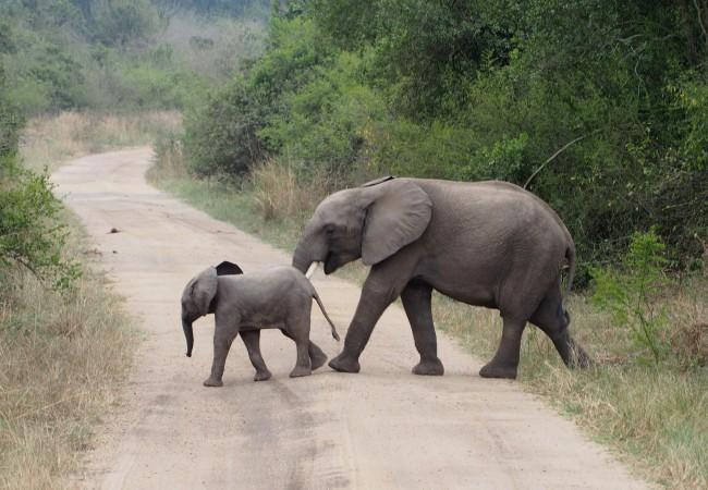 Elefantteja ja lymyileviä leijonia