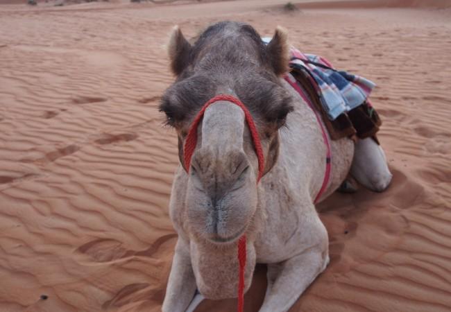 Kamelin selässä vuoden ensimmäiseen aamuun