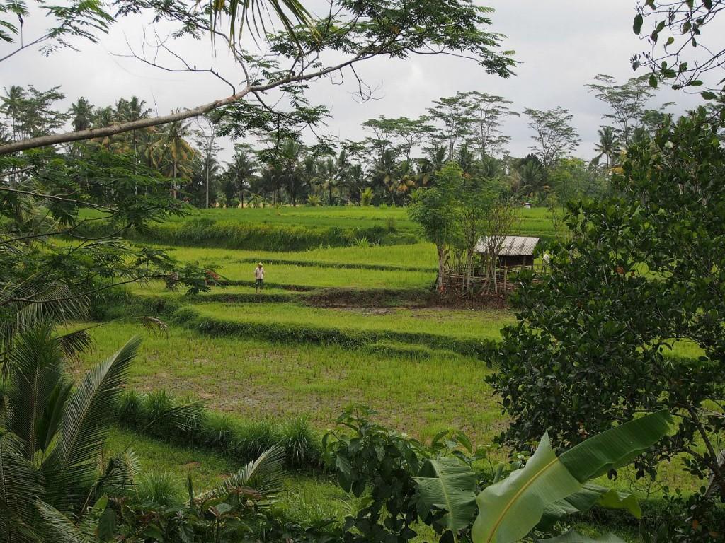 Matkalla Ubudiin