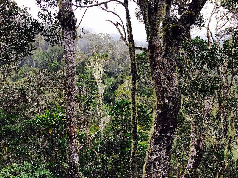 Trooppinen sademetsä ja afrikkalaisia kyliä (Andasibe, Madagaskar)