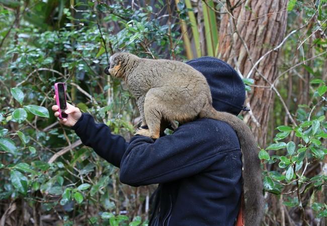 Madagaskarin eläimiä – villejä, puolivillejä ja vangittuja