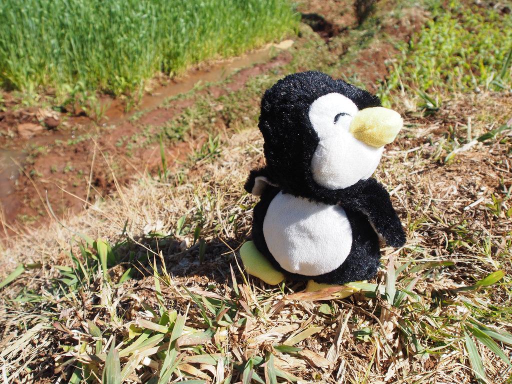 Pingviinin matka Madagaskarilla