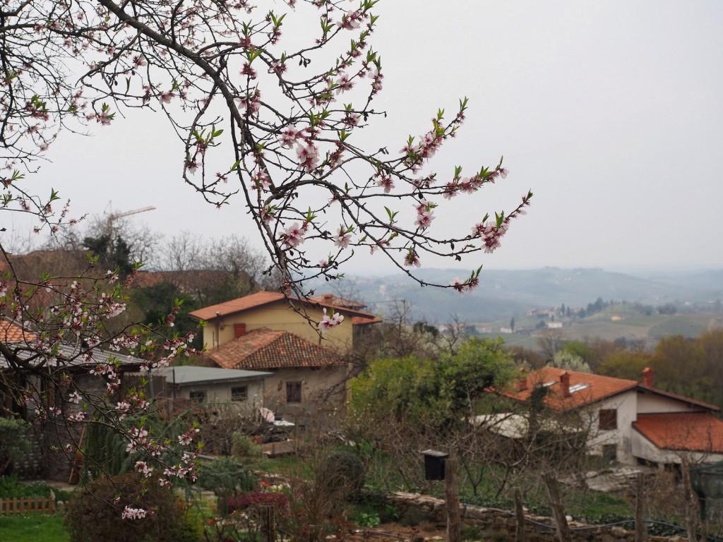 Brda ja kuinka viimeistään rakastuin Sloveniaan