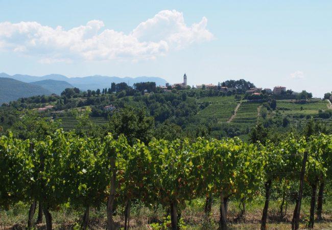 Brda – palasin elämään (viini)matkaunelmia todeksi