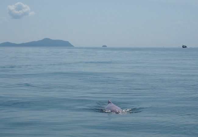 Pinkit delfiinit eivät vain viinipäisen hallusinaatio
