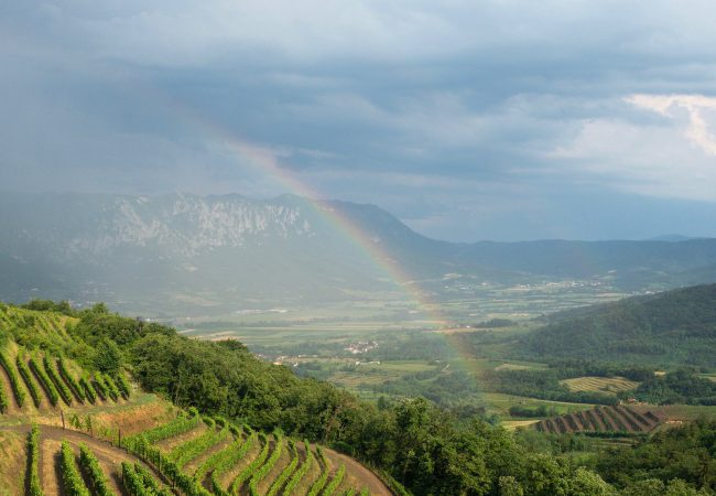 Vipava Valley – viiniä, mykistäviä maisemia ja onnellista kinkkua